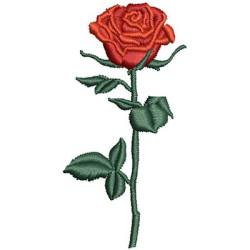 ROSA 6 CM