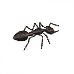 SMALL ANT 1