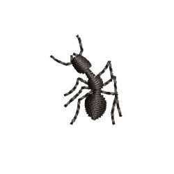 SMALL ANT 2
