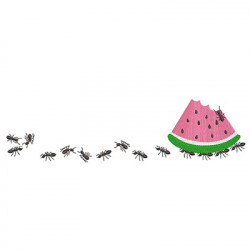 ANTS LOADER WATERMELON