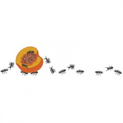 PEACH LOAD ANTS