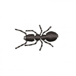 SMALL ANT 3