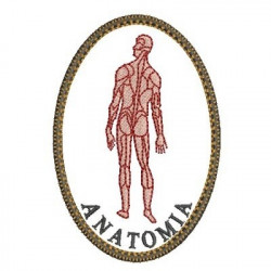 ANATOMY AREA MEDICINE