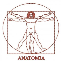 ANATOMY 2 AREA MEDICINE