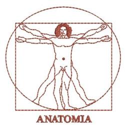 ANATOMÍA 2 AREA MEDICINA