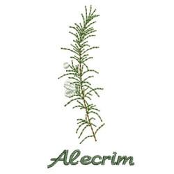 ALECRIM 2