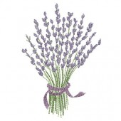 LAVENDER GREATER