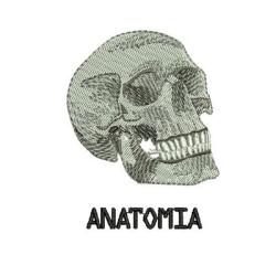 ANATOMÍA 5 AREA MEDICINA