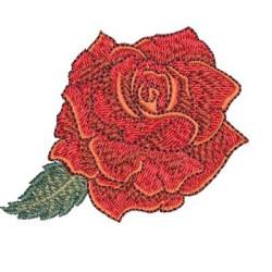 ROSE 29