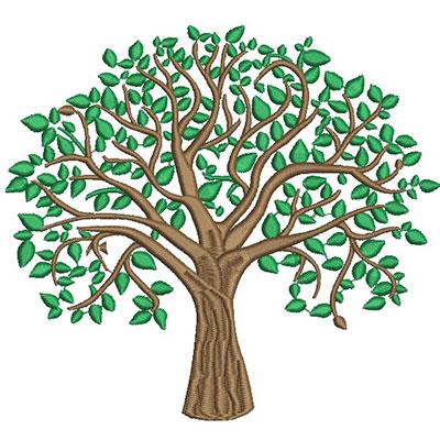 Rvore sem frutos for Arboles de hoja perenne sin fruto